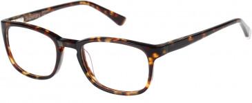 Superdry SDO-JUDSON Glasses in Gloss Tortoise