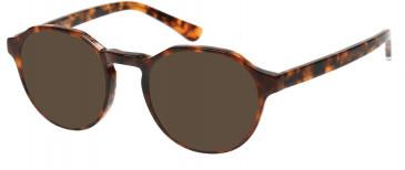Superdry SDO-JADEN Sunglasses in Gloss Tortoise
