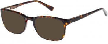 Superdry SDO-JUDSON Sunglasses in Gloss Tortoise