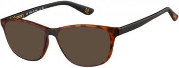 Superdry SDO-HARU Sunglasses in Matte Tortoise