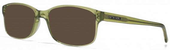 Animal ANIS016 Sunglasses in Crystal Khaki