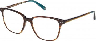 Ted Baker TB8144 glasses in Amber Horn