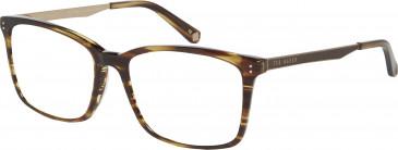 Ted Baker TB8153-53 glasses in Amber Horn