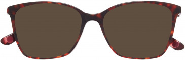 Anna Sui AS5035 sunglasses in Tortoiseshell Burgundy