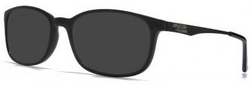 American Freshman AMFO007 sunglasses in Black