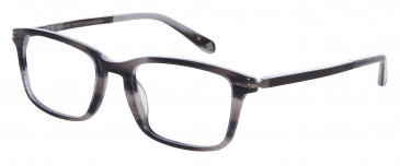 Ted Baker Glasses TB8161 in Grey Horn