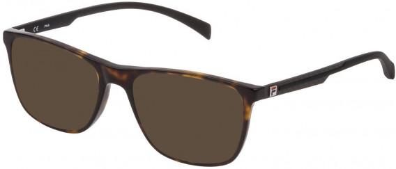 Fila VF9279 sunglasses in Shiny Dark Havana