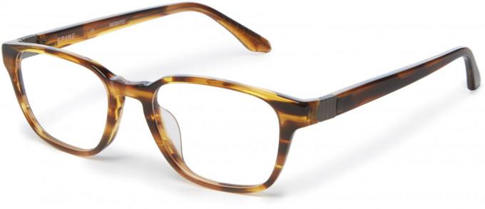 Spine SP1003 Glasses in Havana