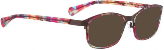 BELLINGER CIRCLE-2 sunglasses in Light Brown