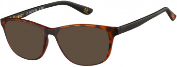 Superdry SDO-HARU Sunglasses in Matte Tortoise