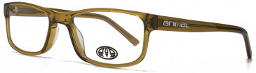 Animal ASHTON glasses in Crystal Brown