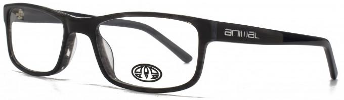 Animal ASHTON glasses in Black/Grey