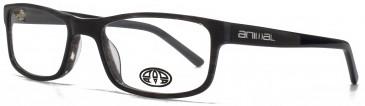 Animal ASHTON glasses in Crystal Brown