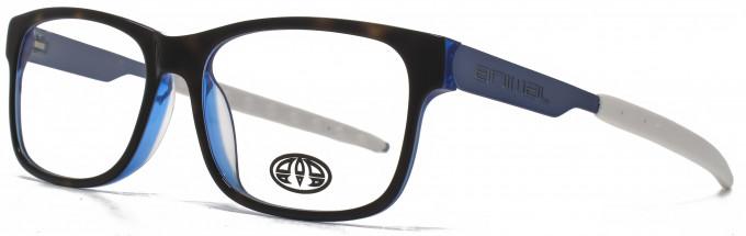 Animal HARISS glasses in Tortoiseshell/Blue