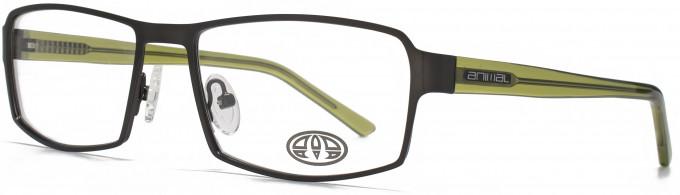 Animal KEATS glasses in Grey/Blue