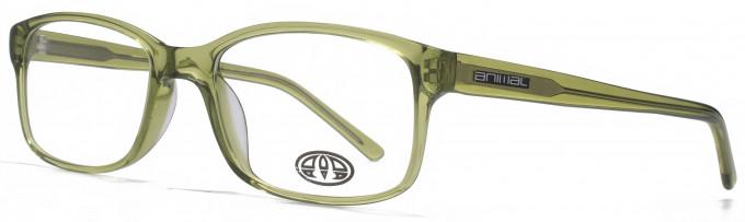 Animal TIMSON glasses in Crystal Khaki