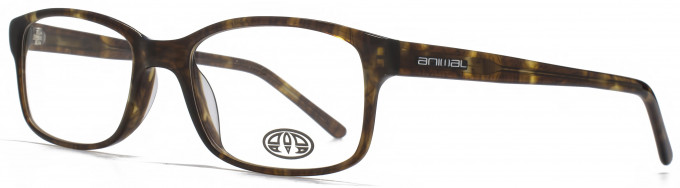 Animal TIMSON glasses in Tortoiseshell
